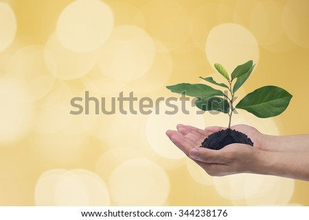human gesture holding a little plants against blurred golden bulbs light backdrop:man hand with a little tree of wealth symbolic concept:business conceptual. - stock photo