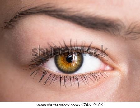 Human green eye with reflection. Macro shot.  - stock photo