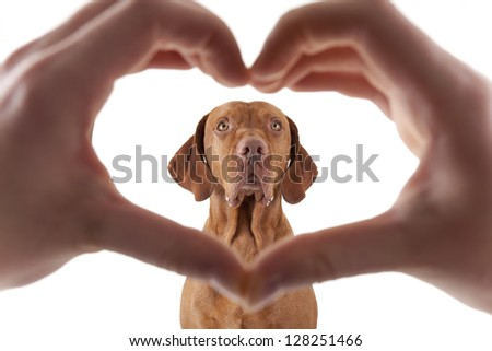 human hand forming a heart shape frame in the foreground with a golden dog in the middle on white background - stock photo