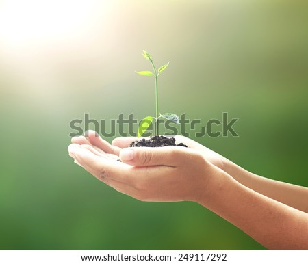 Human hand hold young plant with soil on beautiful sunset background. Health Care, Insurance, World Environment Day Life Beginning Happy New Year 2016 Go Green Eco friendly Ecofriendly CSR ROI concept - stock photo