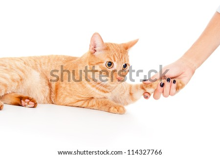 human hand holding a paw - stock photo