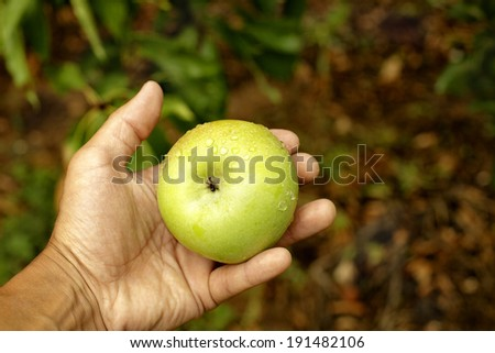 human hand holding an apple - stock photo