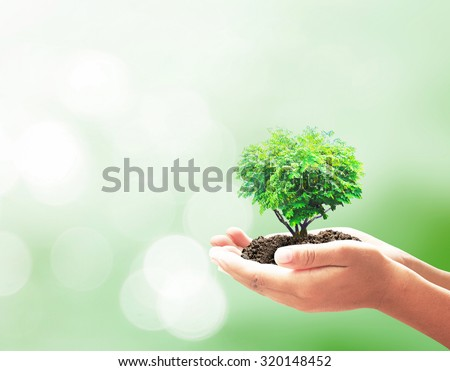 Human hand holding big green tree with soil on blurred colorful forest sunset background. Ecology World Environment Day Alternative energy Arbor Education, Knowledge Learning Preserve Teacher concept. - stock photo
