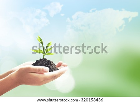 Human hand holding small tree. Young Plant Soil Cloud Sea Ocean Forest Desert Colorful Ecology CSR Map Abstract Life Seed Little Fresh Light Idea Bud Farm Nature Sprout Bright Season Oxygen Medical - stock photo
