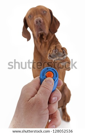 human hand holding training clicker with a dog in the background holding paw obediently  in air on white background - stock photo