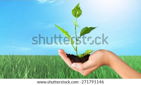 Human Hand. Human hands and young plant - stock photo