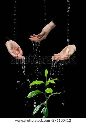 Human hands are united by one goal to transfer each other water for green plant, isolated on the black background. - stock photo