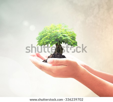 Human hands holding big green plant with soil on blur abstract beautiful sea, ocean, forest, desert over colorful sunset background. Ecology, World Environment Day, Investment, health care concept. - stock photo