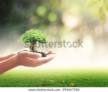 Human hands holding big tree or medium plant with rainy over beautiful circle bokeh light background. Ecology concept. World Environment Day concept. - stock photo