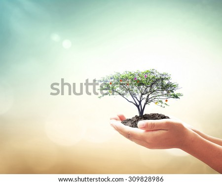 Human hands holding fruitful plant on blurred abstract beautiful sea, ocean, green forest, desert over colorful sunset background. Environment, Healthcare, Investment, Insurance Agent, Love concept. - stock photo