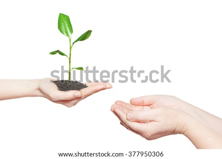 Human hands holding green small plant new life concept - stock photo