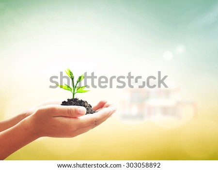Human hands holding small green tree with soil over blurred house and planting plot background. Ecology, Agriculture Environment Go Green Eco Friendly Environmentally CSR Plant Plantation concept. - stock photo
