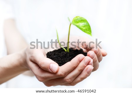 Human hands holding small plant. New life (beginning) concept.