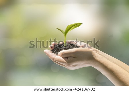 Human hands holding small plant over blurred house on rainy with nature background. Ecology concept. - stock photo