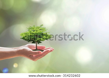 Human hands holding soil growing green tree plant on blur natural background of light greenery leaves: Reforestation, saving environment and eco/ ecosystem conservation campaign: Tree of life concept  - stock photo
