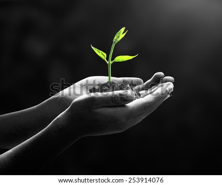 Human hands holding tree. Plant, Soil, CSR, Sprout, Child, Seed, Idea, Responsible, Trust, Learn, Fresh, Food, Wisdom, Insight, Family, Grace, Attitude, Medical, Small, Arbor, Dark, Preserve Concept.