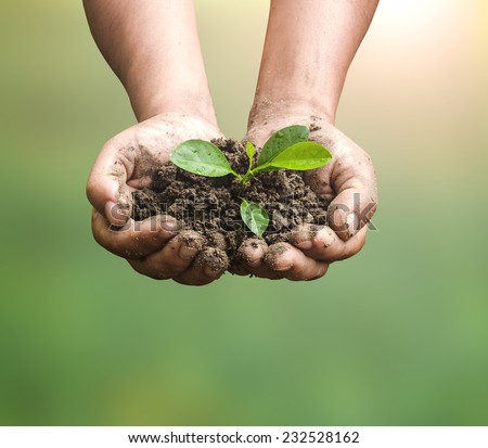 Human hands holding young plant on blurred forest over beautiful sunset or sunrise background. Ecology concept. Environment concept. - stock photo