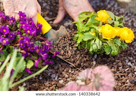 Human hands planting organic herbs with gardening spoon