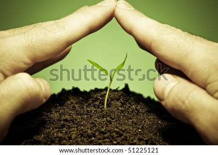 Human hands protecting a new green seedling.Protection plant of parasite or disease concept - stock photo
