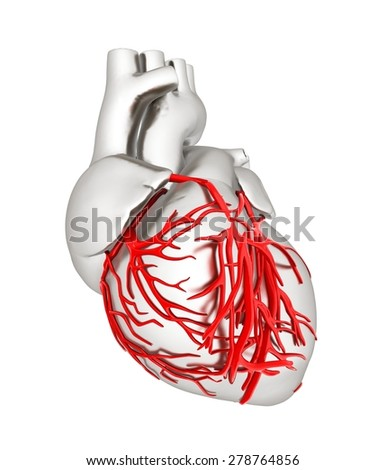 Human heart - stock photo