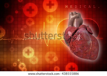 Human Heart - Anatomy of Human Heart