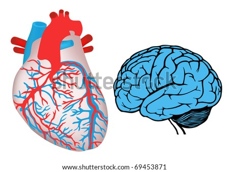 human heart and brain. jpg - stock photo