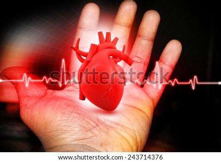 Human Heart  in hand - stock photo