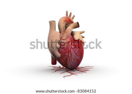 Human Heart New concept - stock photo