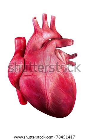 Human heart render/ heart human / isolated on white - stock photo