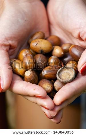 Human hold many little acorns. - stock photo