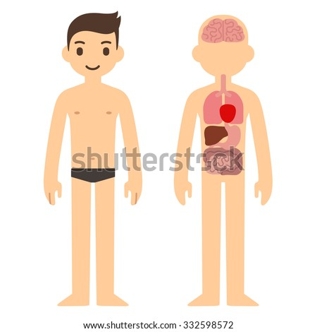 Human Internal Organ Infographic Chart Stylized Stock Illustration ...