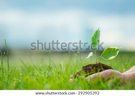 Human is holding a small green plant with soil in it's hands over the green grass background - stock photo