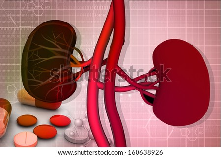 Human kidney and medicine - stock photo