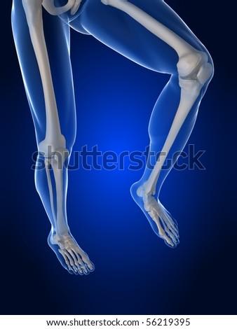 human knee illustration - stock photo