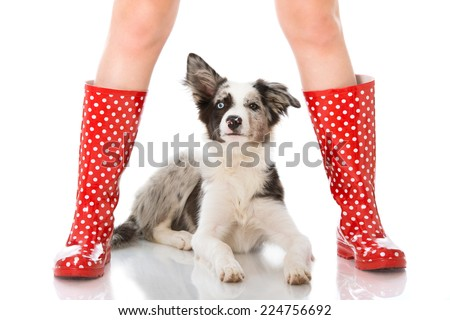 Human legs with dog isolated on white - stock photo