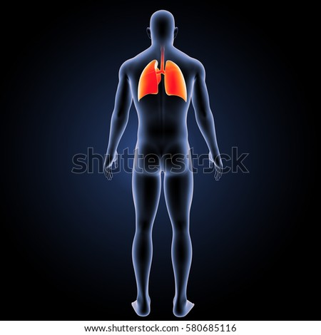 bronchiectasis respiratory system and posterior chest What is bilateral posterior atelectasis of anatomy and physiology respiratory system lungs what decreased chest wall expansion if atelectasis only.