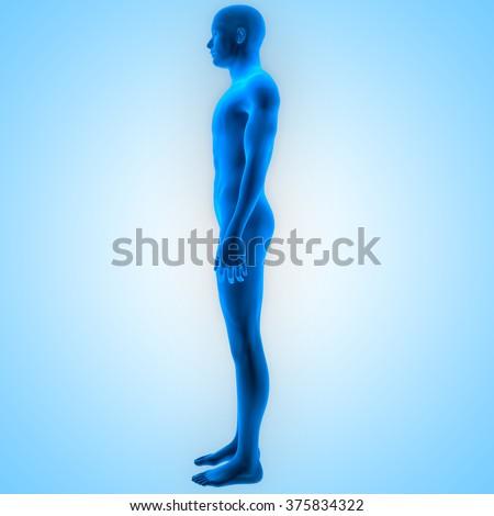 Human Male Muscle Body - stock photo