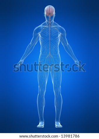human nerve system - stock photo