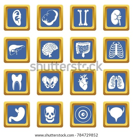 Human organs icons set in blue color isolated  illustration for web and any design