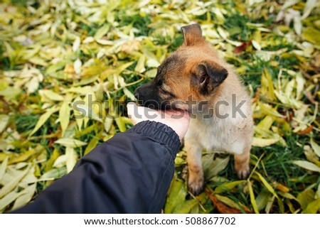 Whitecheeked gibbon stock photo 433381447 shutterstock - Dogs for small spaces concept ...