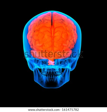 Human red brain X ray - back view - stock photo