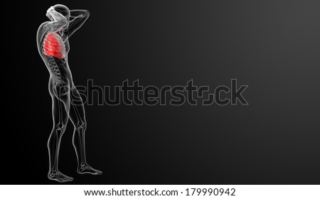 Human respiratory system in x-ray view - side view - stock photo