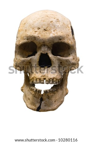 Human Scull isolated - stock photo