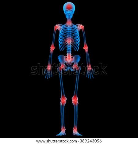 Human Skeleton Bone Joint Pains  - stock photo