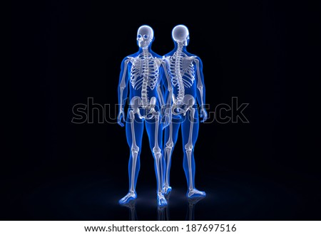 Human skeleton. Front and back view. Contains clipping path - stock photo