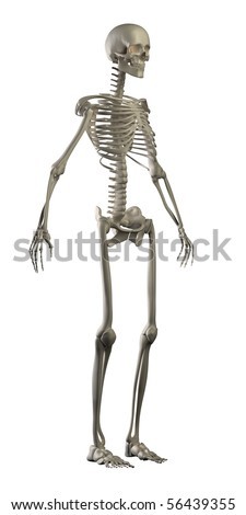 Human skeleton isolated side view - stock photo