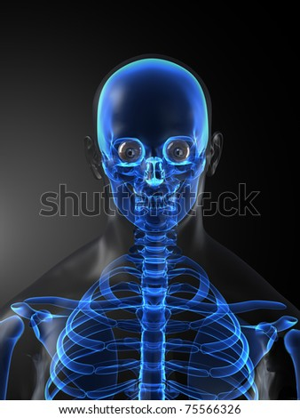 Human Skeleton Medical Scan - stock photo