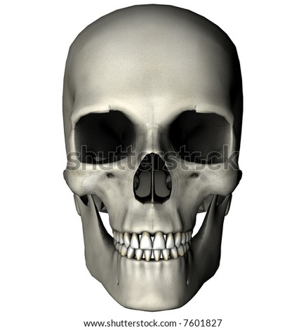 Human skull anterior anatomical view 3D graphic on white background - stock photo