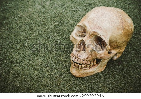 Human skull (cranium) on grass