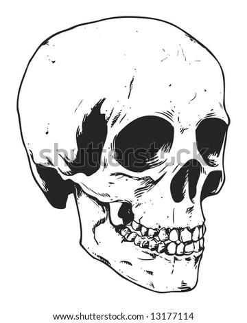 human skull image - stock photo